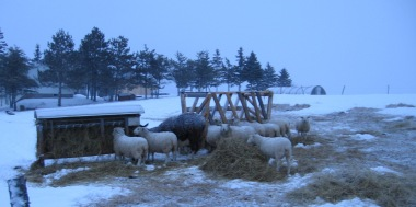 Evening Feeding Time - Winter 2010