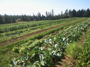 2011 Vegetables