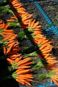Carrots - 1st Week of July 2012
