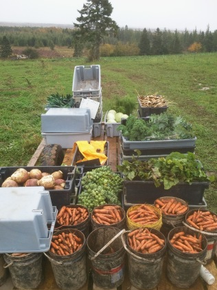 Tuesday Vegetable Package Harvest Day - October