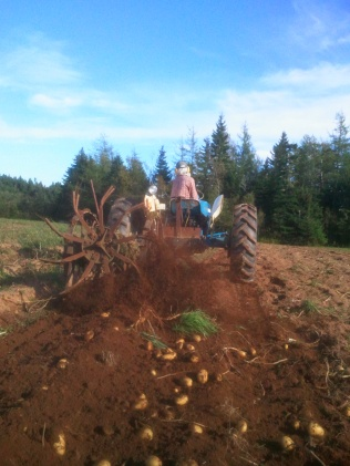 Xander Harvesting Potatoes