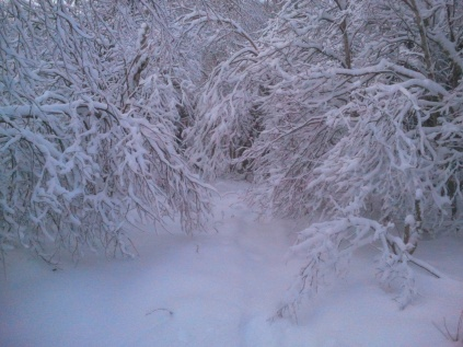 Christmas Time - Snowshoeing in the Woods