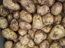 Vivaldi Potatoes