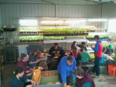 Week 20 - Potato Seed Cutting Party. — at Nature's Route Farm.