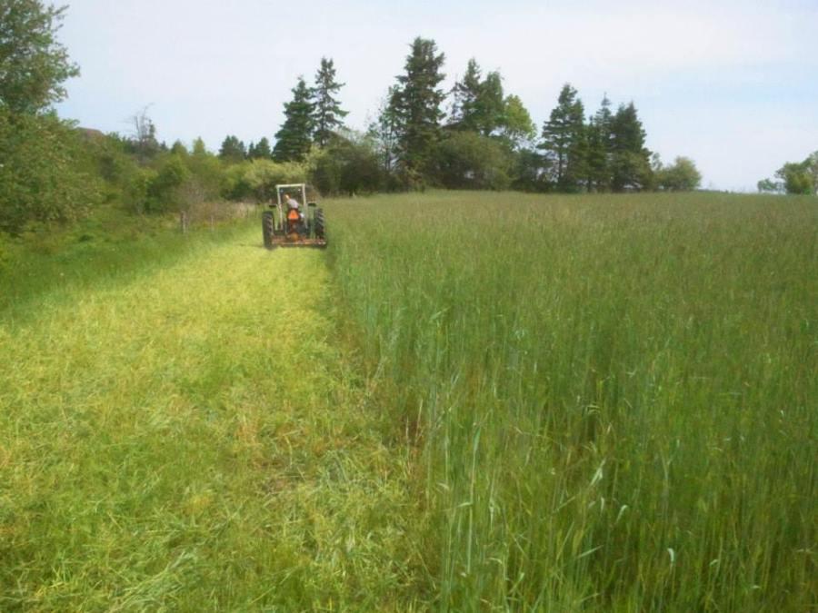 Week 24 - Jeremie mowing the fall rye cover crop.