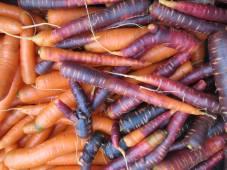 Week 36 - carrots