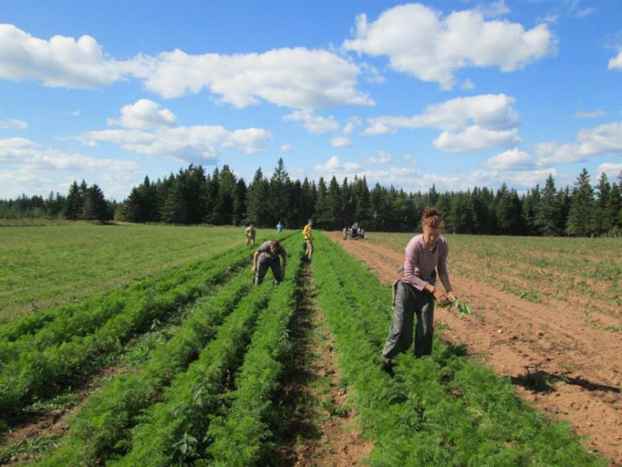 Week 39 - Finally finished the 2014 weeding. Well we did find a few more weeds to pull after this... Jamie, Jeremie, Don, Peter, Ruth (on tractor digging potatoes) and Kelley.