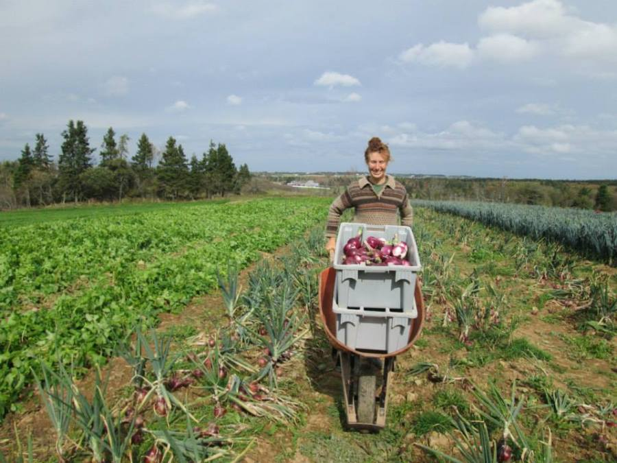 Week 41 - Kelley picking Onions.