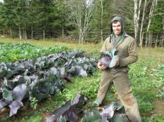 Week 45 - Kent harvesting cabbage in Jolicure; it is definitely getting colder