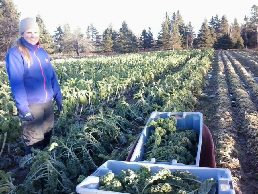 Week 50 - Emilie picking Kale. We picked kale until December 23rd this year!