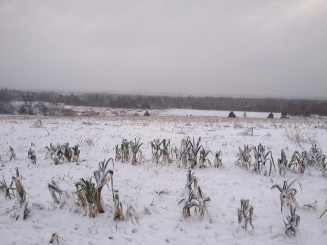 Week 50- Winter has come